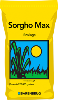 Sorgho Max